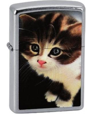 Zippo Kitten 25335
